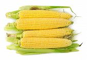 picture of corn-silk  - Heap of corns on the cob with hair isolated on white background - JPG