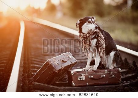 poster of Mongrel On Rails With Suitcases.