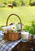 Different Milk Products: Cheese, Cream, Milk, Oil