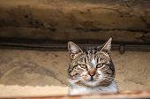 Countryside cat closeup
