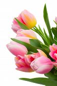 Bouquet Of Pink And Yellow  Tulip Flowers