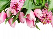 Pink Tulips And Hyacinth Flowers Close Up