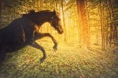 foto of fiery  - A photo of a horse rearing on its hind legs in a magical forest - JPG