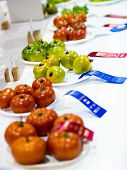 Tomatoes With Ribbons At An Agricultural Competition