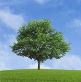 pic of lonely  - green lonely tree growing in a field - JPG