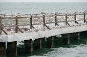 Gulls Nest On The Pier