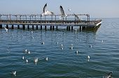 Seagulls On The Pier