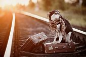 stock photo of dog-house  - Dog on rails with suitcases - JPG