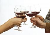 Clinking glasses of red wine in hands isolated on white