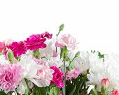 Pink And White Carnation Flowers