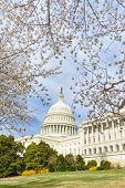 The Capitol in Spring - Washington DC, United States of America