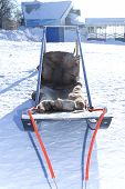 Sleds Racing Sled Dogs