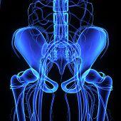 stock photo of head femur  - The hip bone is formed by three bones - JPG