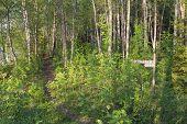 Trail through a bushy area.