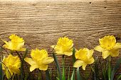 picture of daffodils  - Yellow daffodils on brown wooden board - JPG