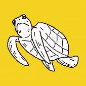 picture of tortoise  - Tortoise Doodle - JPG