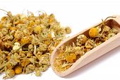 stock photo of chamomile  - Dried chamomile heap of dried chamomile on wooden spoon - JPG