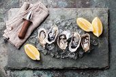 picture of pearl-oyster  - Oysters on stone plate with ice and lemon - JPG