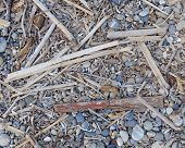 picture of algae  - dry algae and twigs polished by the sea - JPG