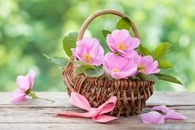 stock photo of wild-brier  - Wicker basket with wild rose flowers - JPG