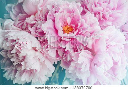 Fresh bunch of pink peonies peony roses flowers white with blue fresh bunch of pink peonies peony roses flowers white with blue effect shine pastel mightylinksfo