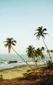 palmeiras na Baía tropic