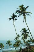 Tropical Praia de Vagator, Índia
