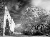 Landscape In Infrared