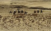 Tourists on camels at Giza pyramids poster