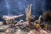 stock photo of coral reefs  - Tropical Caribbean coral reef tank - JPG
