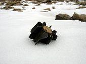 Mortar In Snow