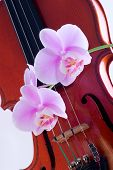Orchids Twig And Violin