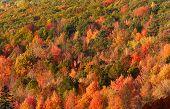 Carpet of Autumn trees