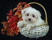 Cute Fall Puppy