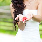 Juicy Red Raspberries In The Hands Of The Bride