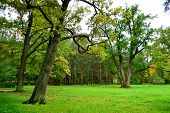 foto of tsarskoe  - The photo of park in Tsarskoe Selo Russia - JPG