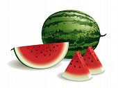 stock photo of watermelon slices  - Realistic vector illustration of a watermelon and watermelon slices - JPG
