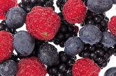 Mixed Red Fruits