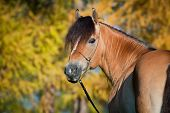 Horse (portrait) in autumn.