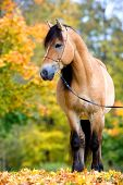Beautiful horse is standing in autumn forest