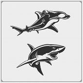 Vector Illustration Of White Shark And Hammerhead Shark. Vector. poster
