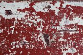Red And White Distressed Wooden Painted Texture. Painted Texture In Obsolete Paint. Grungy Shabby Su poster