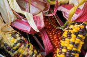 Close Up Of American Indian Corn In A Basket