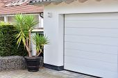 A Beautiful Large Yucca Plant In A Large Black Pot Stands Next To A White Garage Door poster
