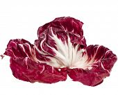 Red Cabbage Radicchio Rosso isolated on white
