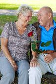 older elderly couple in love. man gives a rose.