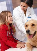 Little girl listening to heartbeat of golden retriever at pets' clinic, veterinarian examining dog.