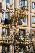 Light Beige Facade Of A Residential Building. Birch In The Foreground. Square Window Decoration. The poster