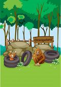 Illustration of the Orangutans at the zoo