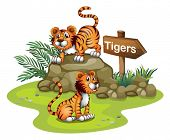 Illustration of the two tigers with a wooden arrow board on a white background